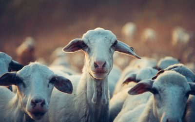How to Prevent Food-and-Mouth Disease in Livestock