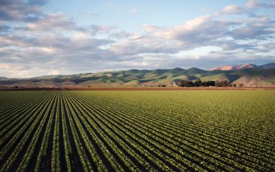 What is the role of water in agriculture?