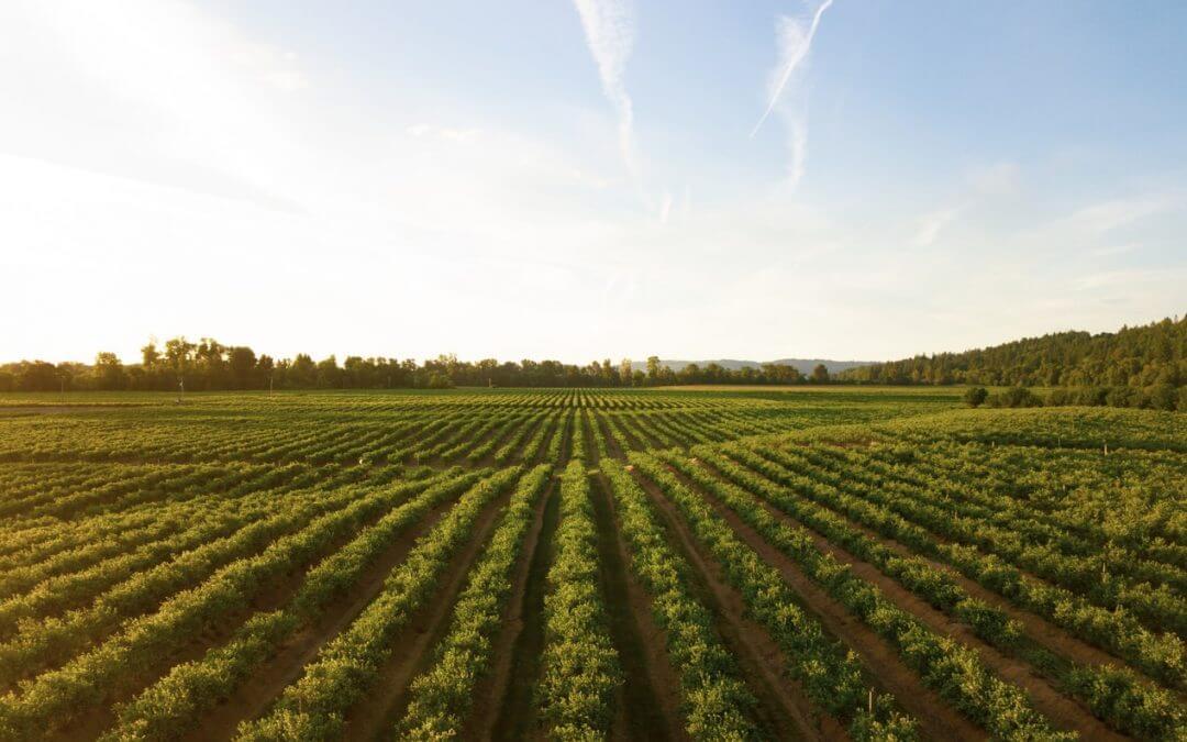 Farm fields harvest